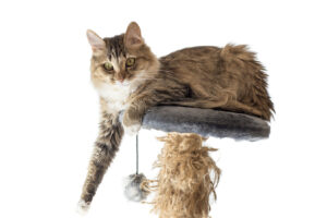 Homecare in Goodyear AZ: Pet Therapy and Elderly Adults